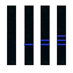 чёрный пояс